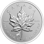 Privy Silver Maples